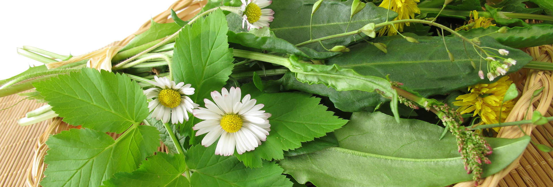 Die Bedeutung grüner Nahrung oder: Chlorophyll ist wichtig!
