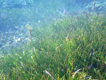 Chlorella Spirulina Omega 3 Gehalt - Sind Sie mit Algen gut versorgt?